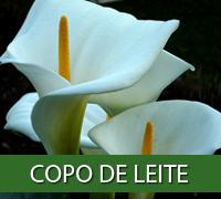 copodeleite